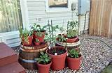 vegetable container gardening ideas no more dirty looks