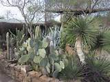 Home Landscaping Ideas on Pinterest | Cacti Garden, Succulents Garden ...