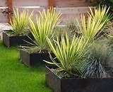 Pots de fleurs, bacs et jardinières - 60 idées élégantes