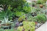 succulent garden front garden ideas pinterest