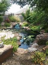 Gardens Ideas, Backyards Ponds, Water Gardens, Backyard Ponds, Design ...