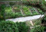 Vegetables Garden Ideas with Stylish Designs | Samples Photos Pictures ...