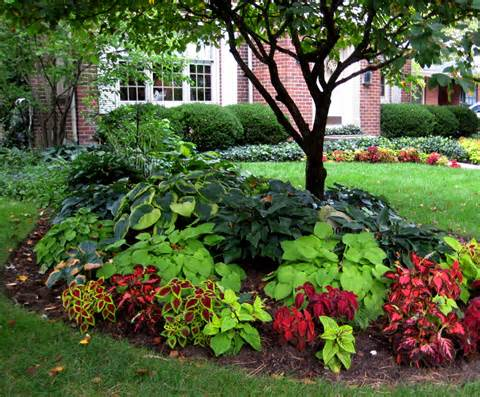 Garden, : Splendid Decorating Ideas Of Landscaping Plants Front Yard ...