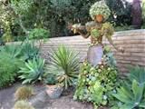 succulent dish garden ideas 18 astounding succulent garden ideas