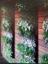 Vertical garden | Beautiful garden ideas | Pinterest