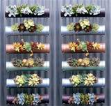 PVC vertical garden ideas