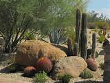big boulders and cactus | succulent landscape ideas | Pinterest