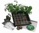 indoor culinary herb garden kit great gift idea grow cooking herbs