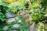 Tropical gardens are filled with sculptural leaf forms and vibrant ...
