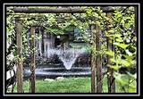 beautiful grape trellis | Outdoors | Pinterest