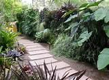 aménagement jardin avec des pas japonais et plantes exotiques