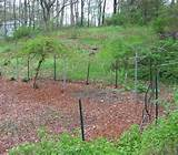vegetable garden fencing ideas planning your first vegetable garden