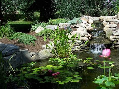 Garden Ponds | Water Features | Water Gardens