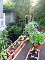 apartment patio gardening ideas the manhattan apartments