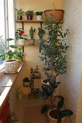 small balcony design ideas with pot plants