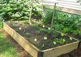 vegetable garden Front Yard Container Gardening