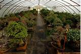 Vero Beach botanist donates 100 bonsai to Heathcote for new exhibit ...