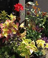 fall container garden great gardens ideas pinterest