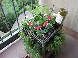 My Milkcrate balcony container garden | Milk Crates, Crates and Milk