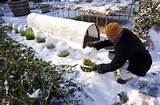 Winter Gardening | Gardening tips | Pinterest