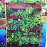 vertical vegetable garden cool Vertical Vegetable Garden