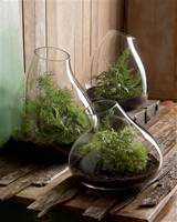 Modern Glass Terrarium Indoor Garden Planter | NOVA68 Modern Design