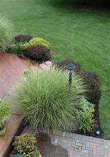 ornamental grasses fill my backyard because they are so easy to care