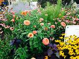 Wildflower garden | Home Ideas - Outdoors | Pinterest