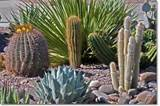 planning for desert landscaping urbangardening