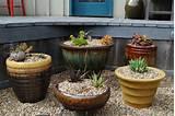 succulent container garden saratoga