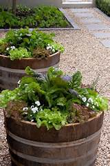 Wine barrel planters with vegetables | Garden | Pinterest