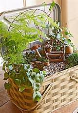 fairy garden inside a tin picnic basket container from midwest living