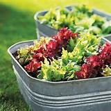 Simple Salad-Garden Containers | Style | Pinterest