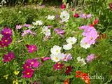 Gardening | Drought Tolerant Gardening | Drought Gardening Ideas