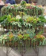 some fabulous and inspiring plantings of succulents on pinterest