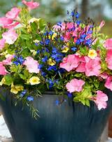 flowering container garden colorful flowering container garden