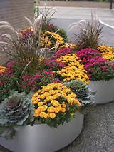 fall flower containers