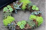 Make a succulent wreath: 9+ DIY Succulent Garden Ideas at ...