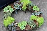 make a succulent wreath 9 diy succulent garden ideas at