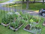 square foot garden | Gardening | Pinterest