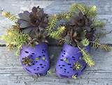 Urban Flower Container Gardening Style Domination Succulents Crocs