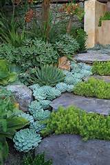 Succulent garden ideas | Backyard | Pinterest