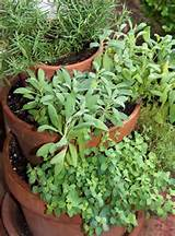 container gardening picture of vertical herb garden photograph