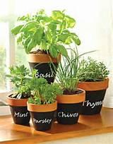 easy diy herb garden ideas