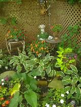 Corner garden | Corner Gardens Ideas | Pinterest