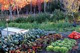 Top Tips for Great Fall Gardens - Organic Gardening - MOTHER EARTH ...