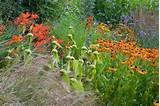 Garden Ideas, Border ideas, Perennial Combinations, Plant Combinations ...