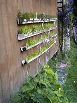 Vertical gutter garden on the shed | Edible Garden Ideas | Pinterest