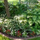 ... bed - hostas, caladiums, begonias | Calling for caladiums | Pinterest