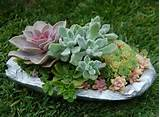 gardening ideas succulent container garden ideas1030 x 759 181 kb jpeg ...